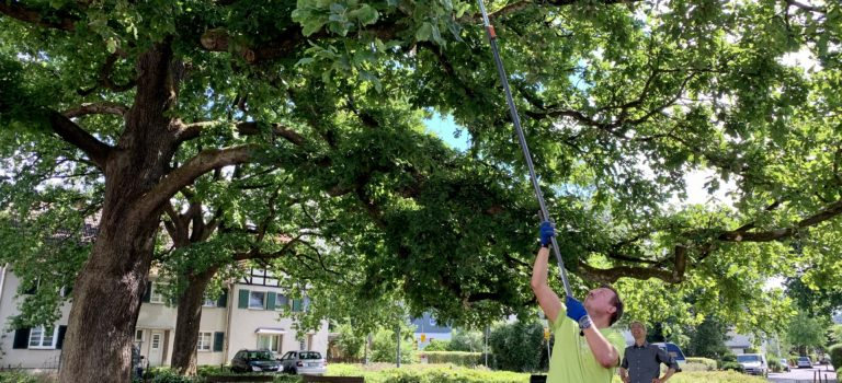 Baumpflege in der Siedlung